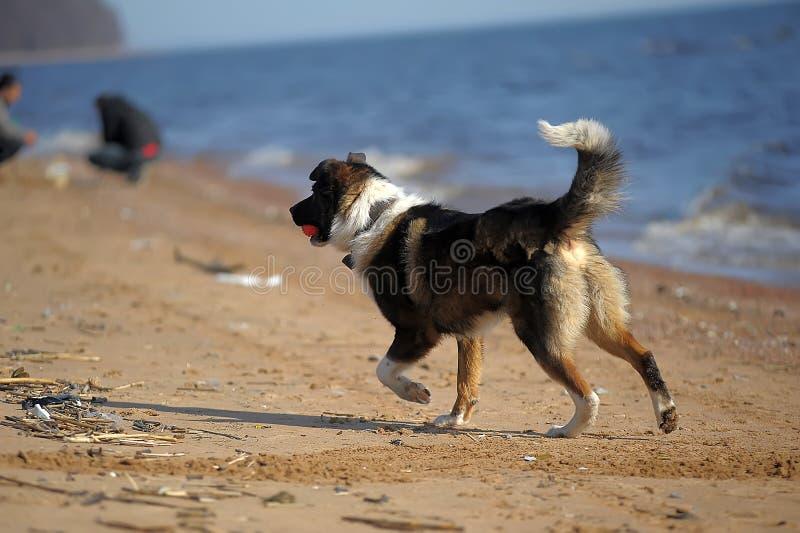 Hundezwinger auf dem Strand stockbilder