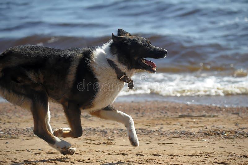Hundezwinger auf dem Strand lizenzfreies stockfoto