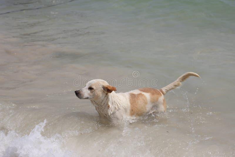 Hundezwinger glücklich stockfoto