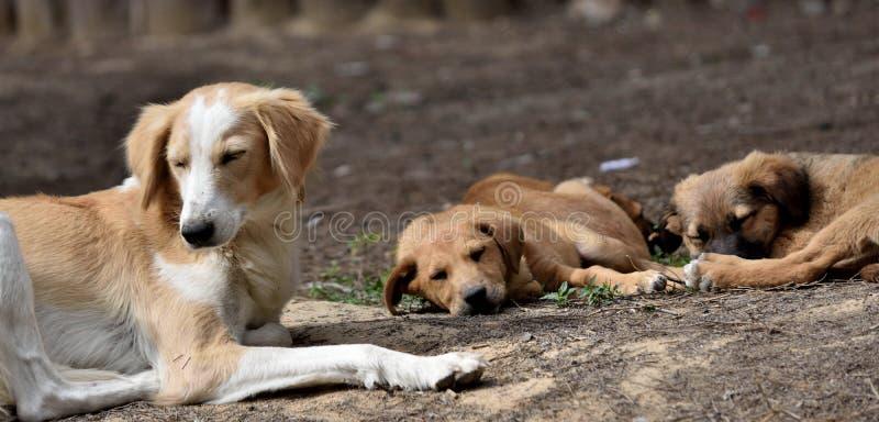 Hundfamilj på semester royaltyfri foto
