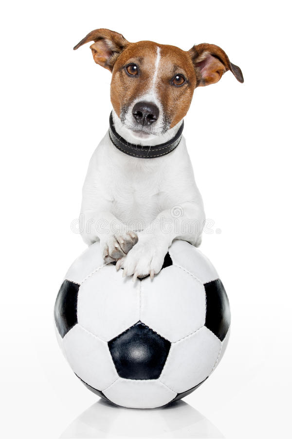 hundfotboll arkivfoton