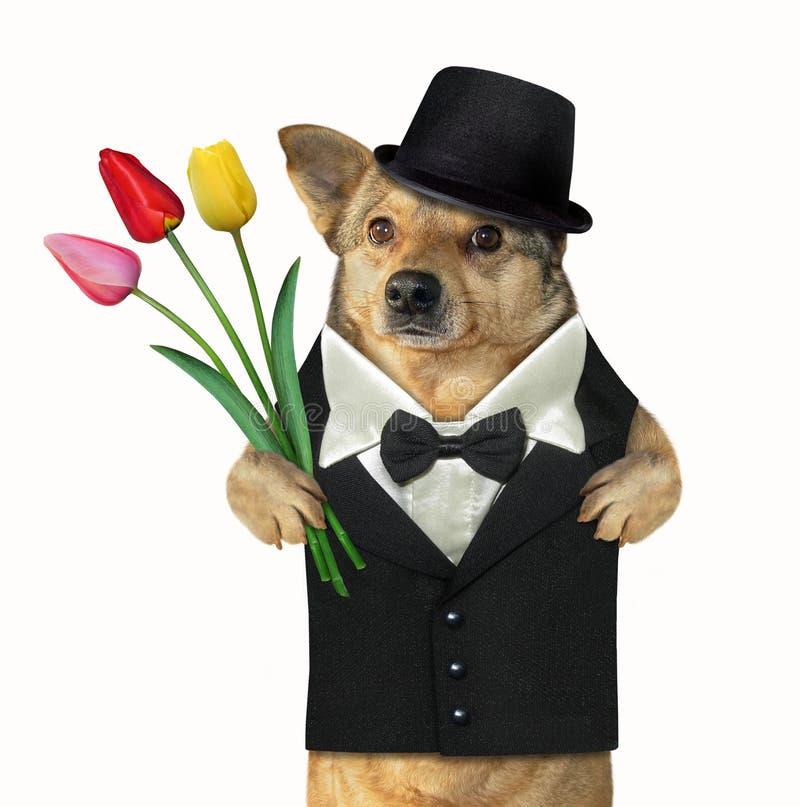 Hundgentleman med tulpan royaltyfria foton