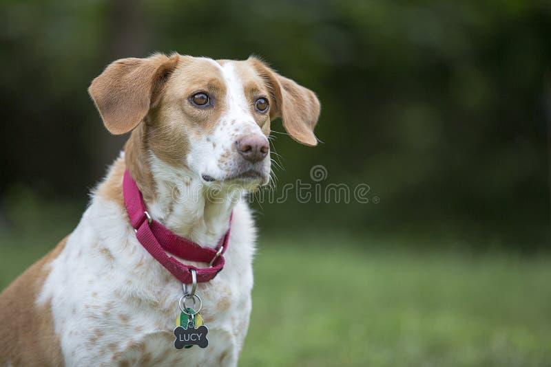 Hundhund arkivbilder