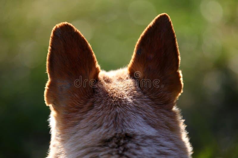 Hundhuvud med svartöron från baksida royaltyfria bilder