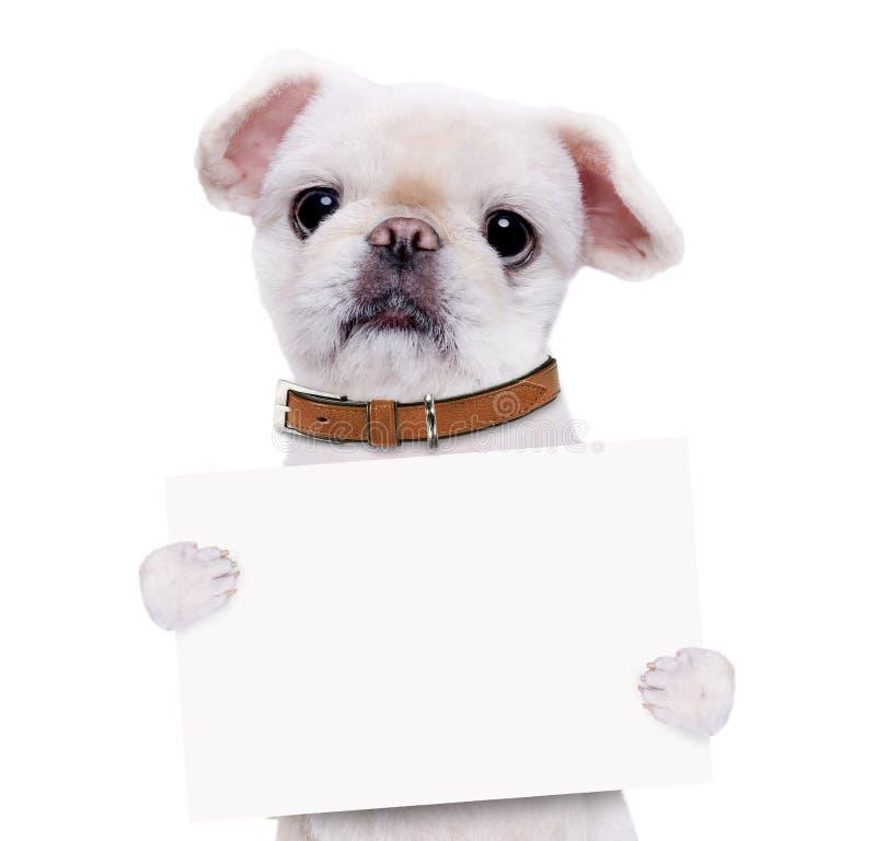 Hundinnehavet i hans tafsar det vita banret royaltyfria foton