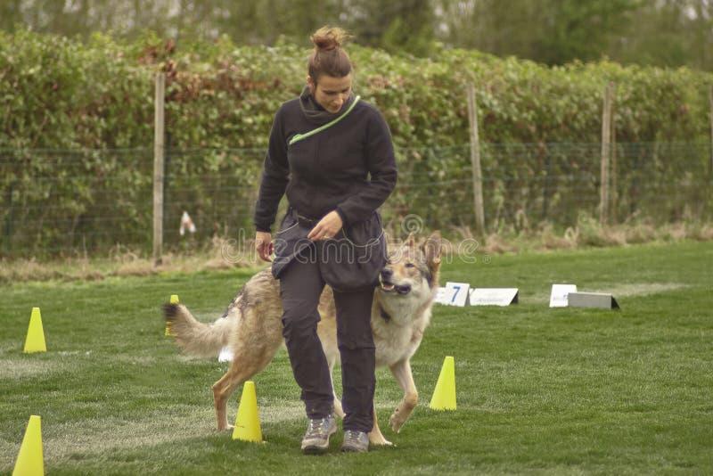 Hundinstrukt?r #4 royaltyfria foton
