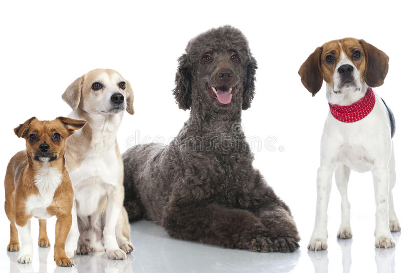Hundkapplöpning royaltyfri foto