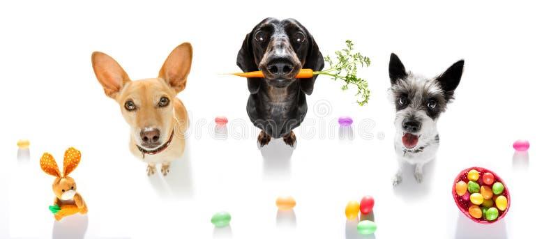Hundkapplöpning för påskkanin royaltyfria bilder