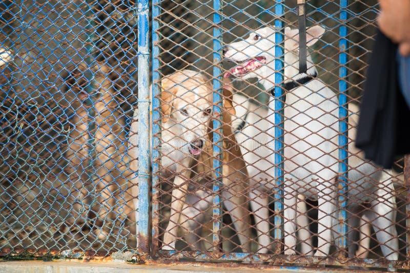 Hundkapplöpning i en metallbur royaltyfri bild