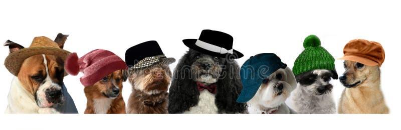 Hundkapplöpning med den moderna huvudbonadsammanträdesidan - förbi - sida arkivbilder