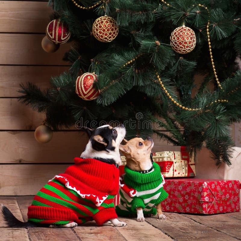 Hundkapplöpning nära en julgran royaltyfri bild
