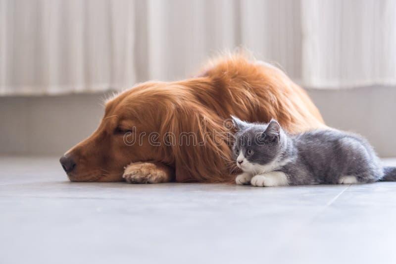 Hundkapplöpning och katter, royaltyfria foton