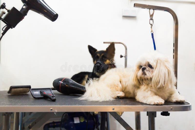Hundkapplöpning på att ansa salongtabellen som är klar att ansas royaltyfria foton