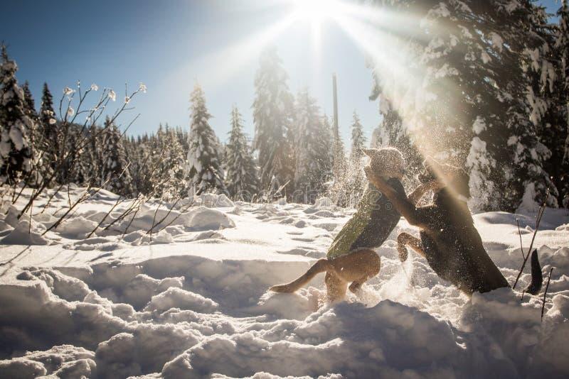 Hundkapplöpning som spelar i snö under solen fotografering för bildbyråer