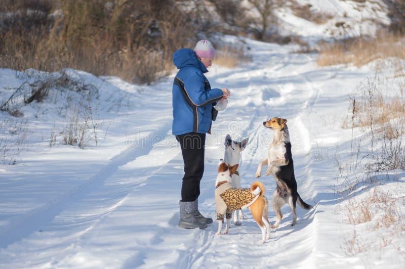 Hundkapplöpning som tigger förlagen för att ge dem någon mat medan lek som är utomhus- på vintersäsongen arkivbilder