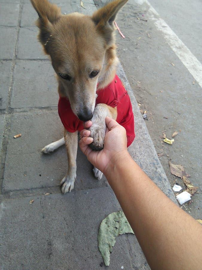 Hundkapplöpningen ska hälsa hälsningbenet arkivfoto
