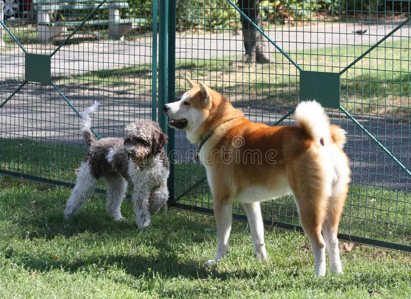 Hundkapplöpningen som spelar i hund, parkerar royaltyfria foton
