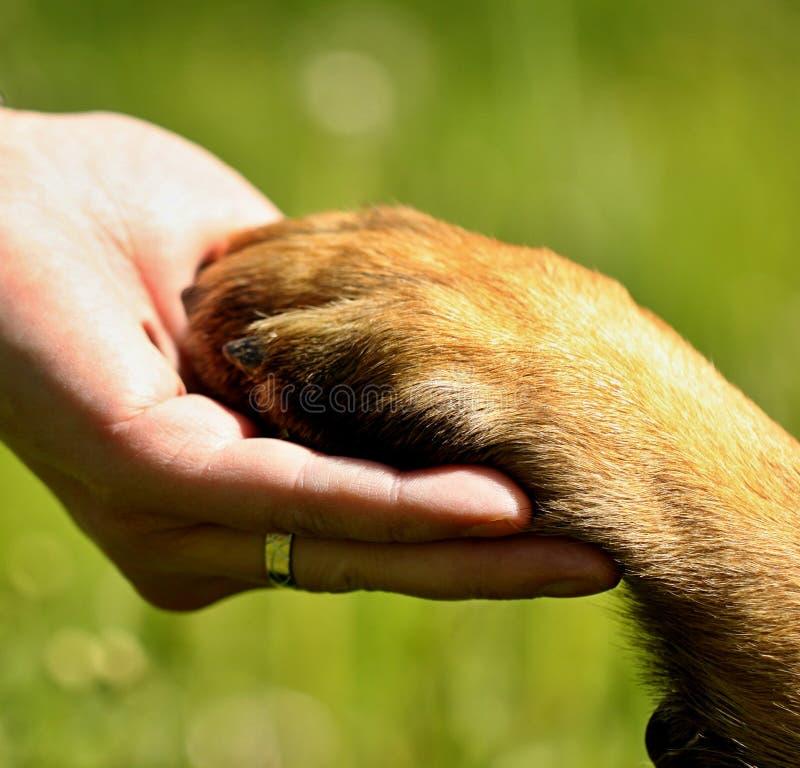 Hundkapplöpningen tafsar och mans handen royaltyfria bilder