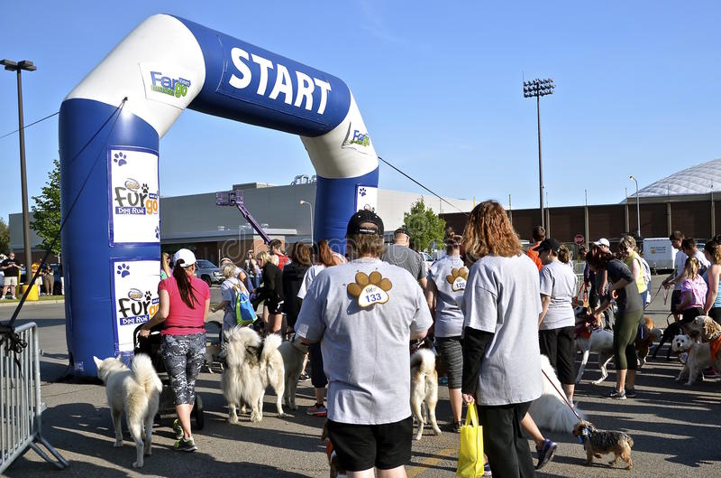 Hundkapplöpningen väntar på loppstart arkivbild