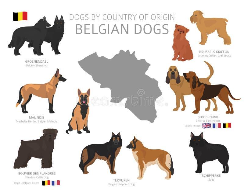 Hundkappl?pning av ursprungsland Belgiska hundavel r royaltyfri illustrationer