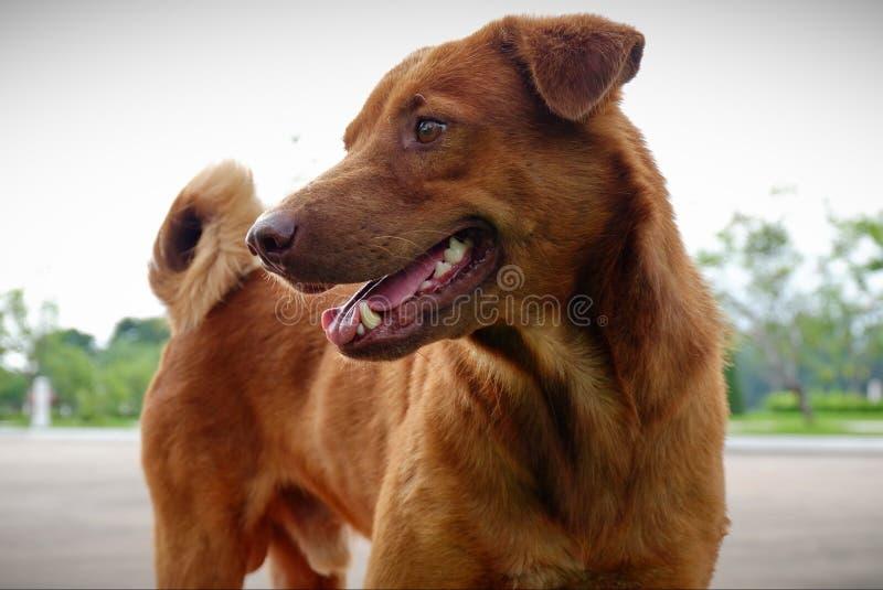 Hundkappl?pningen ?r gulliga husdjur fotografering för bildbyråer