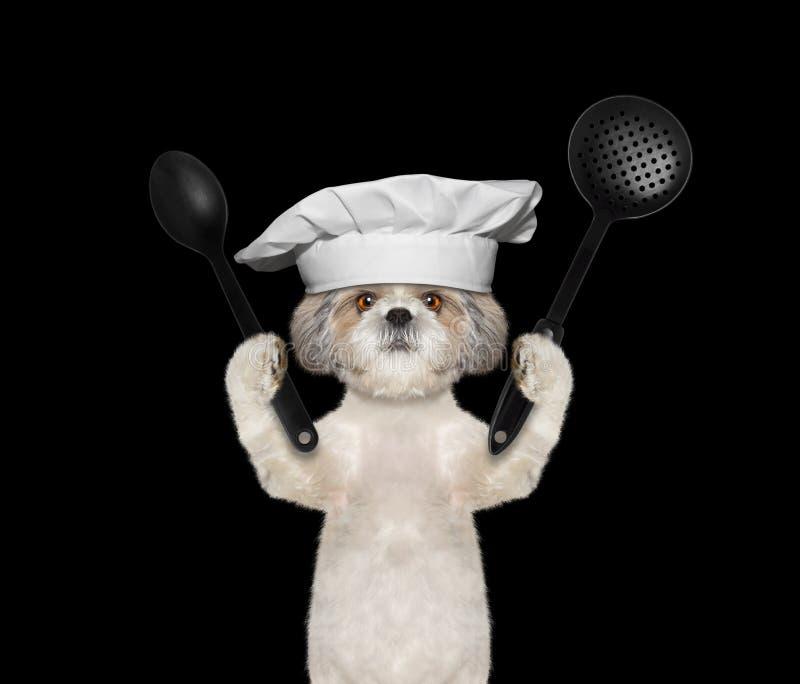 Hundkocken ska förbereda mål royaltyfri bild