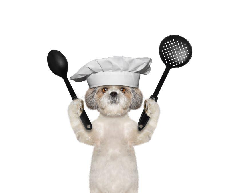 Hundkocken ska förbereda mål royaltyfri fotografi