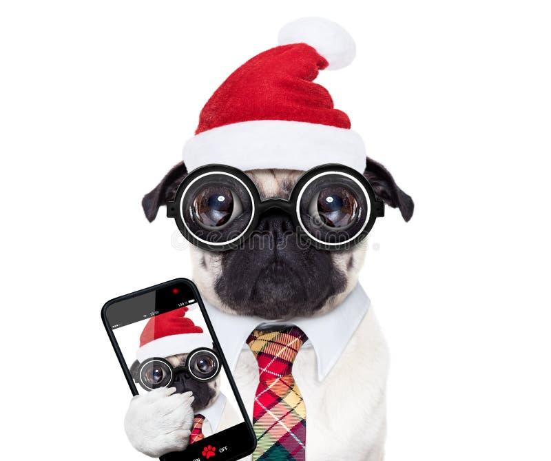 Hundkontorsarbetare på julferier royaltyfri bild
