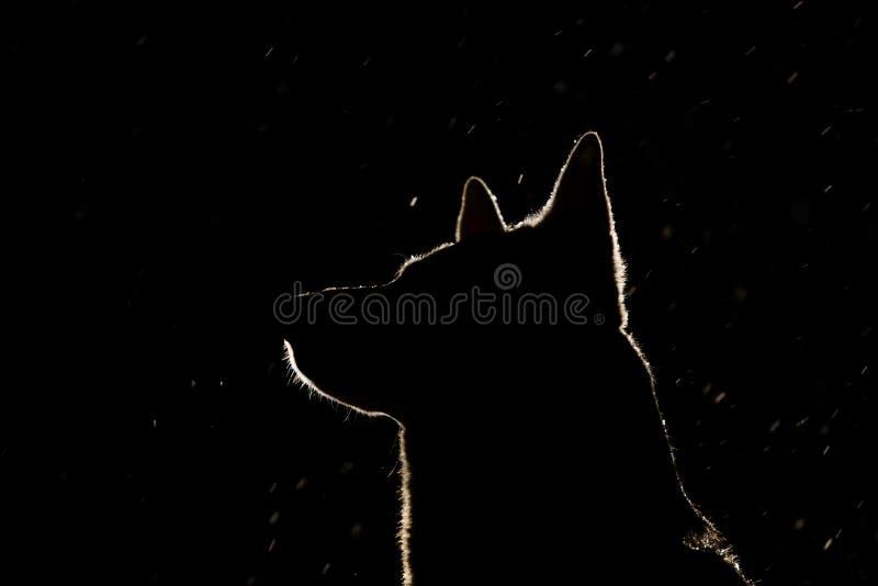 Hundkontur i billyktorna royaltyfria bilder