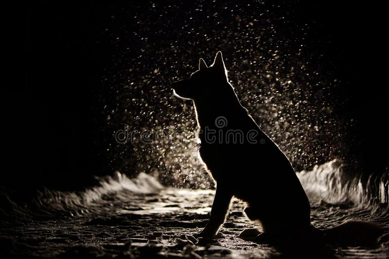 Hundkontur i billyktorna royaltyfri fotografi