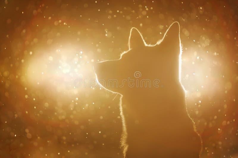 Hundkontur i billyktorna royaltyfri foto