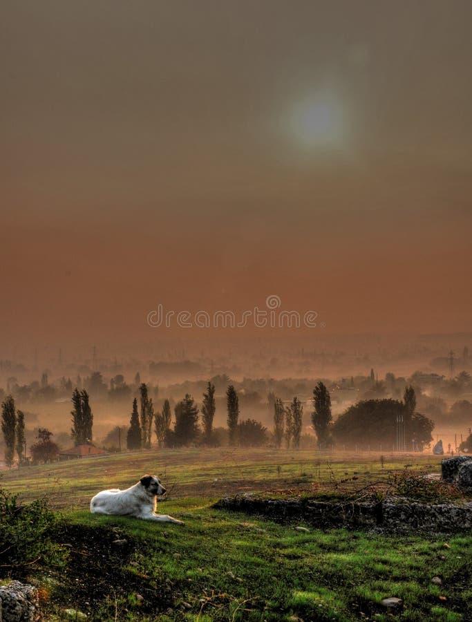 Hundlögn på gräs under soluppgången fotografering för bildbyråer