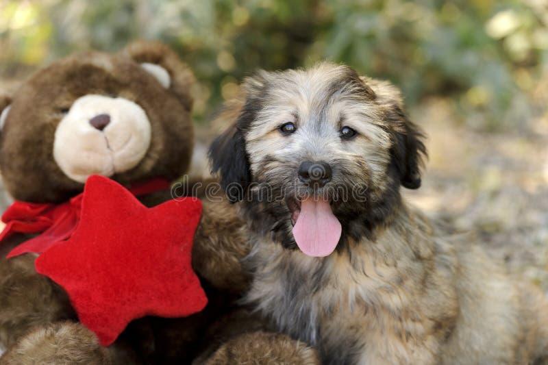 Hundleksaker royaltyfri foto