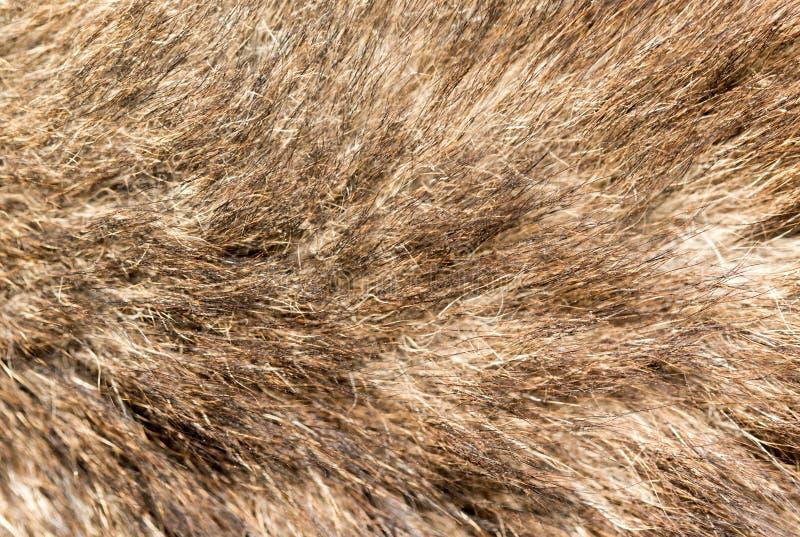 Hundpäls som bakgrund textur royaltyfri foto