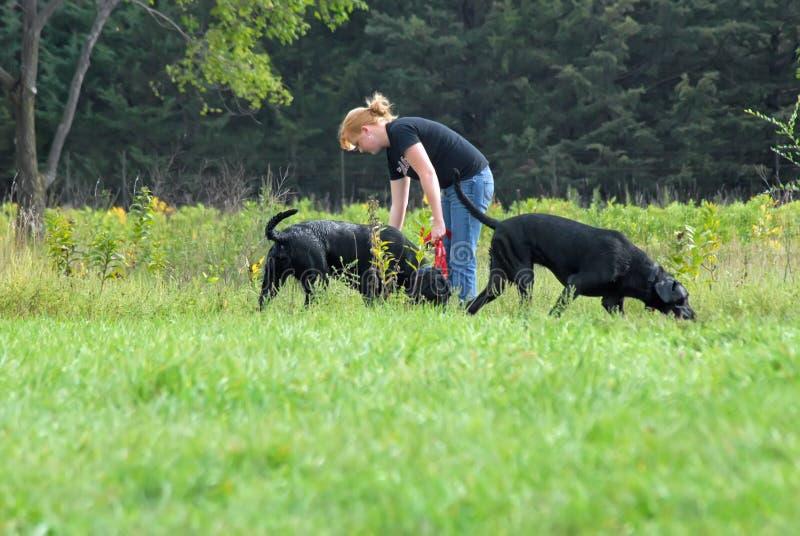 hundparkkvinna royaltyfri foto