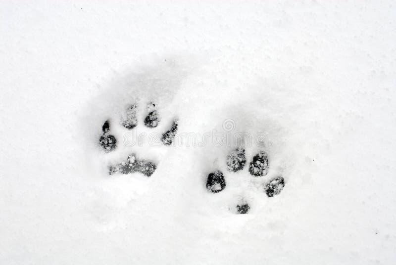 hundpawprints royaltyfri bild