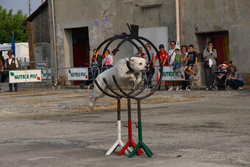 hundpolis arkivfoto