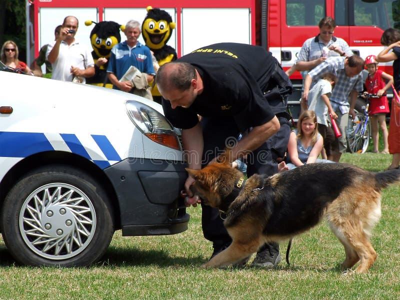 hundpolisutbildning fotografering för bildbyråer