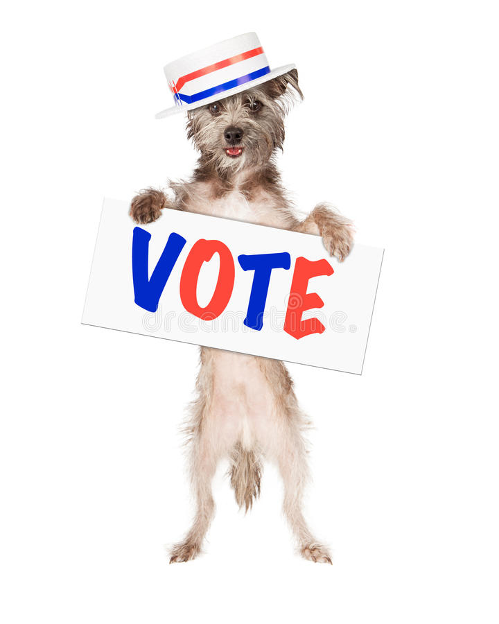 Hundpolitiker Vote Sign royaltyfri fotografi