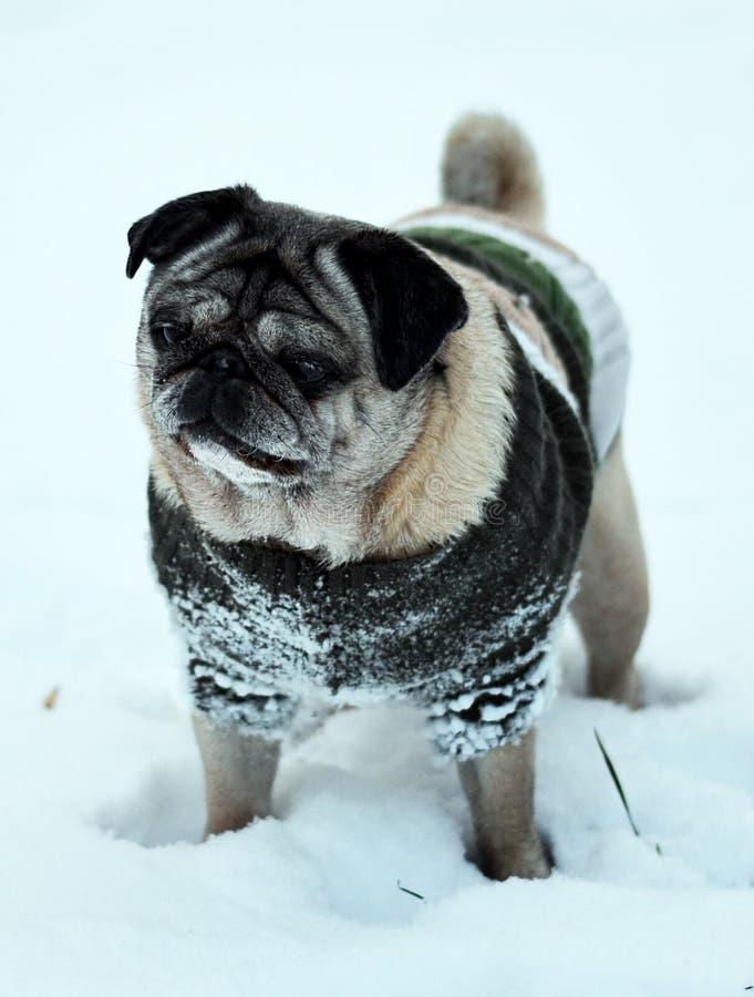 Hundpug auf der Schneestellung lizenzfreie stockbilder