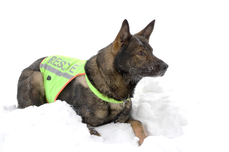 hundräddningsaktion fotografering för bildbyråer
