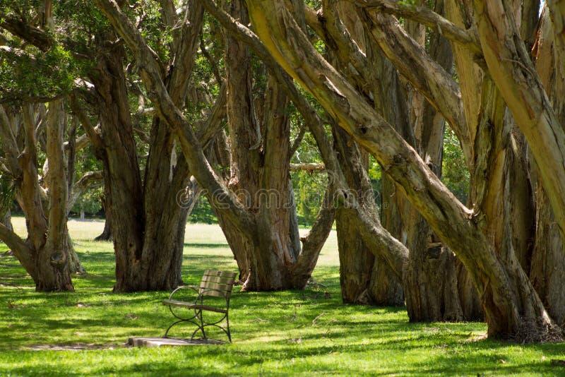 hundraårs- park sydney royaltyfria foton