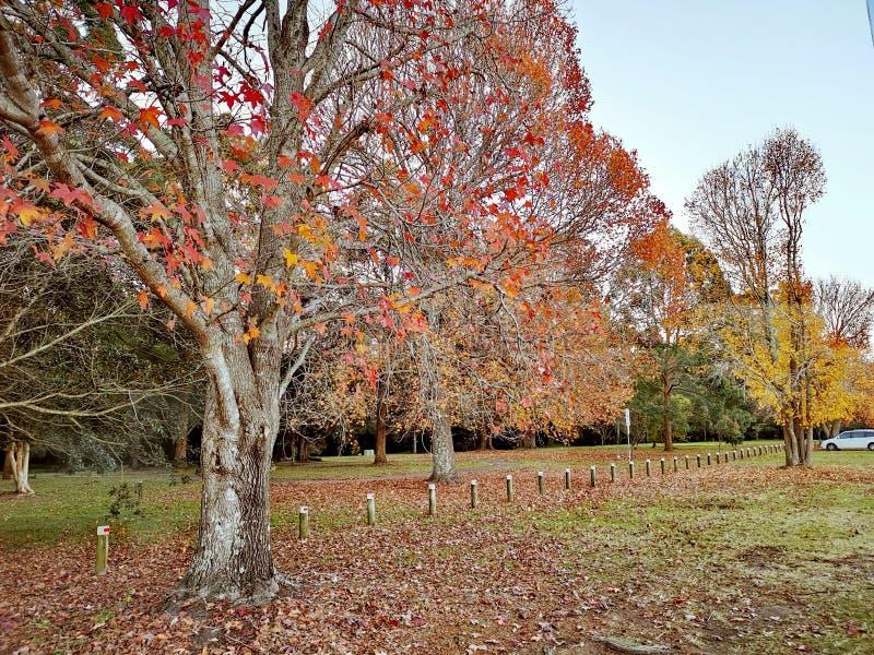 Hundraårs- trädgårdar @ Narara, central kust NSW Australien royaltyfri fotografi