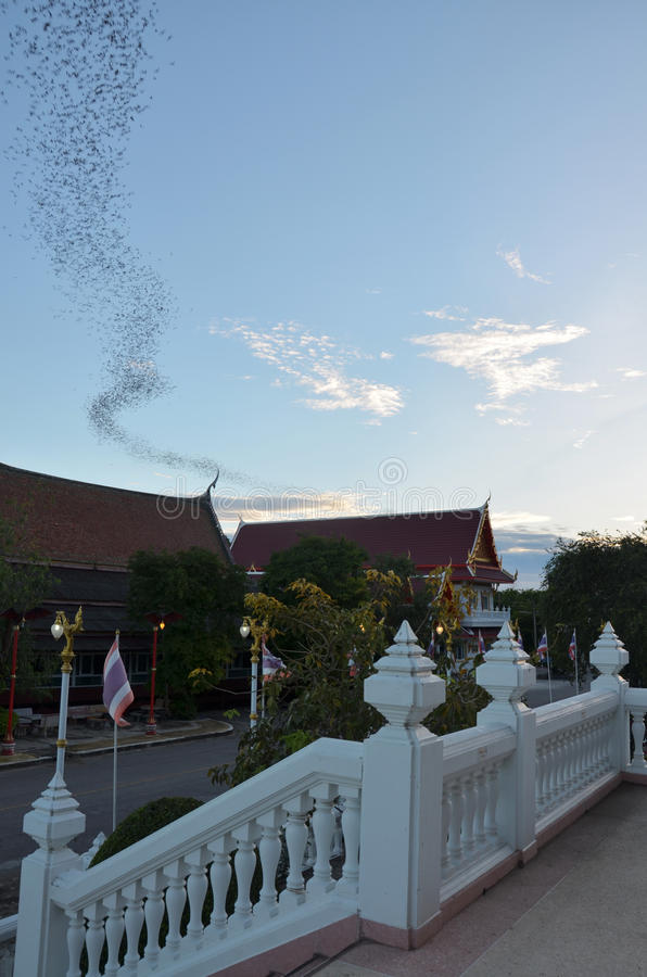Hundred Million Bats at Wat Khao Chong Pran, Ratchaburi Thailand royalty free stock photo