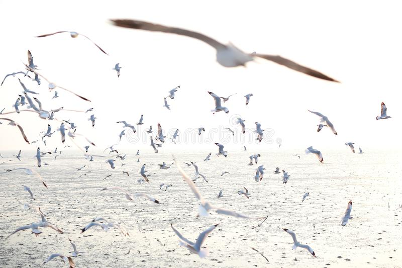 Hundreds of seagulls flying in the sky at sunset.  stock photography
