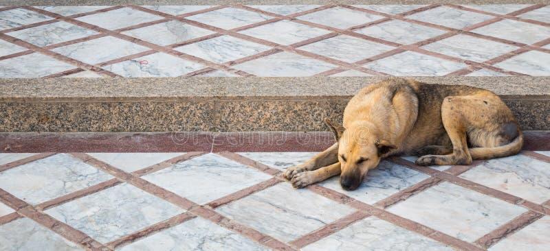 Hundsömnen på trappan arkivbild