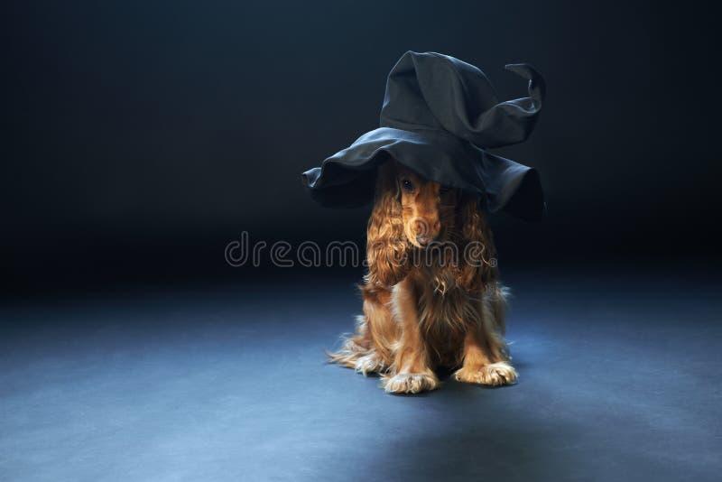 Hundsammanträde i en häxahatt fotografering för bildbyråer