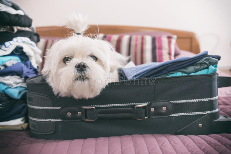 Hundsammanträde i resväskan royaltyfri fotografi
