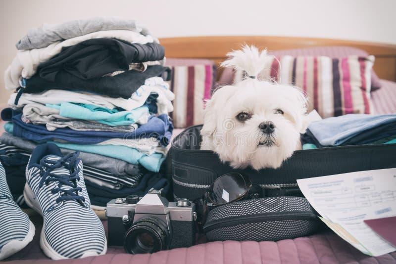 Hundsammanträde i resväskan royaltyfria foton