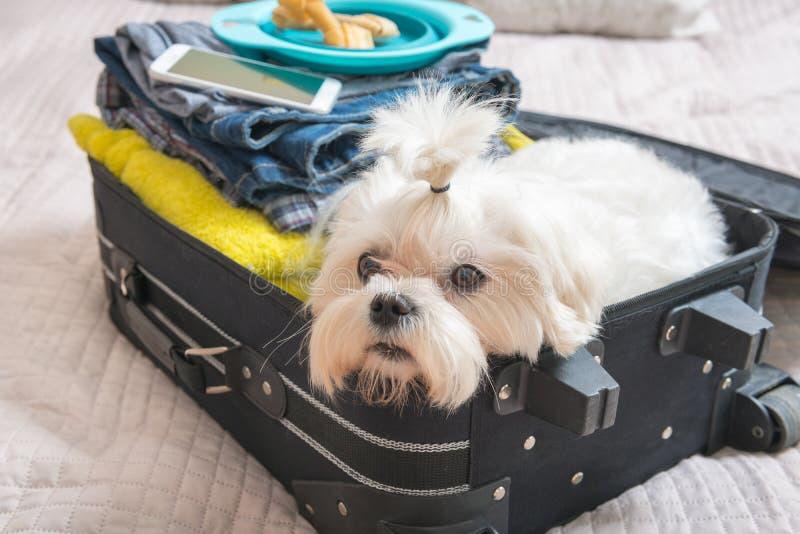 Hundsammanträde i resväskan royaltyfria bilder